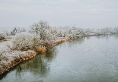 Niva rieky Moravy
